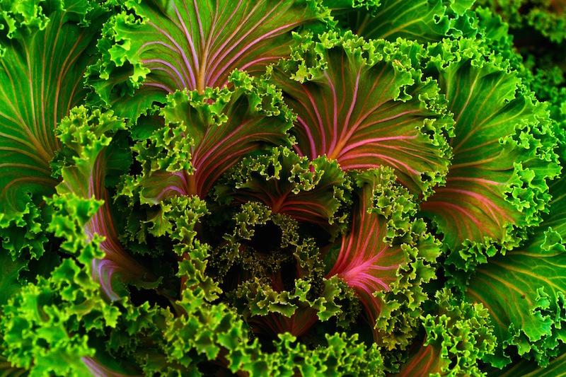 the vibrant kale