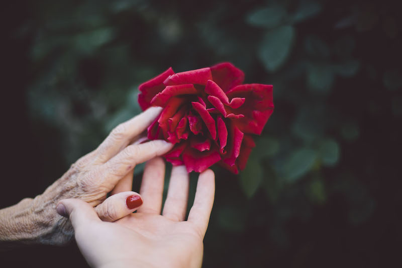 hands rose.jpg