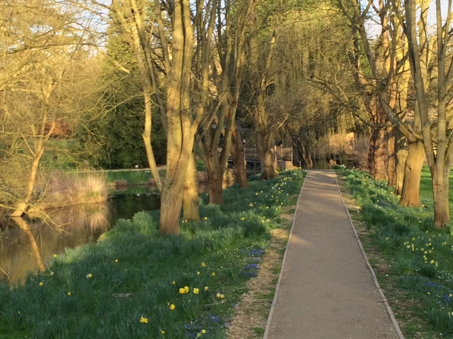Addison's Walk, Magdalen College, Oxford University