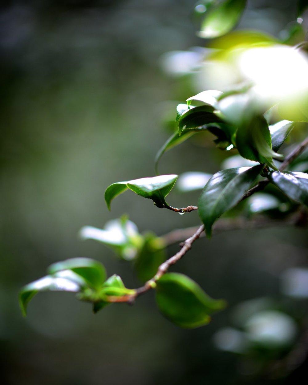 descanso-gardens-michal-pfeil-07.jpg