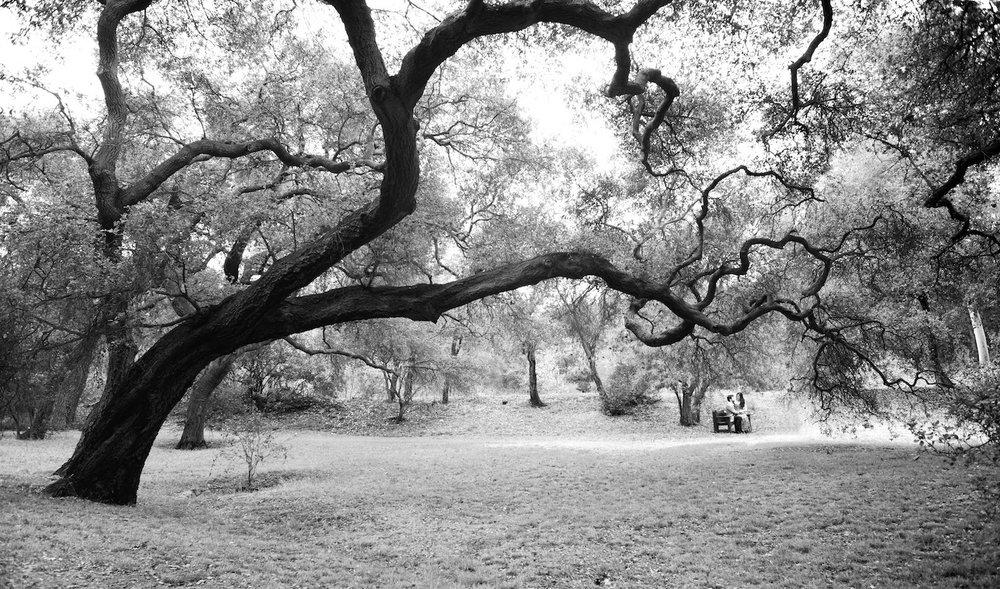 descanso-gardens-michal-pfeil-11.jpg