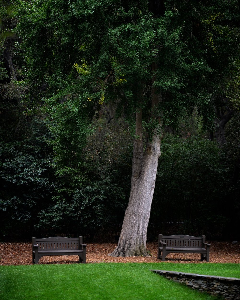 descanso-gardens-michal-pfeil-15.jpg