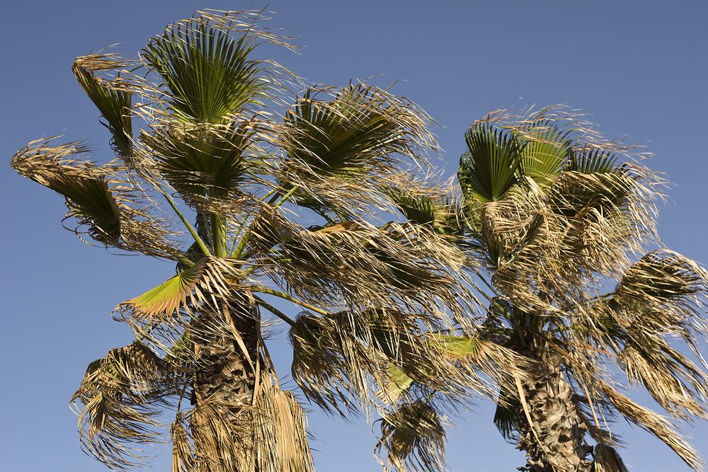 wind palms 10.jpg
