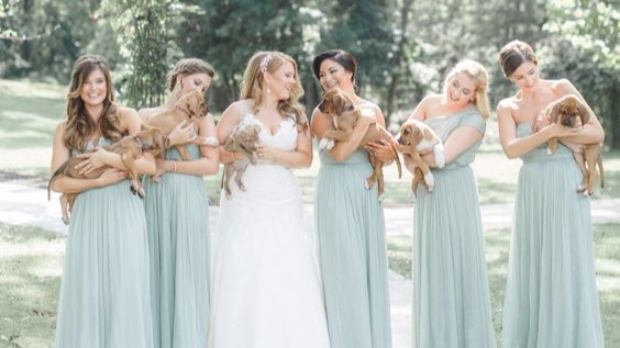 https://www.thedodo.com/wedding-photos-with-rescue-puppies-2009574419.html