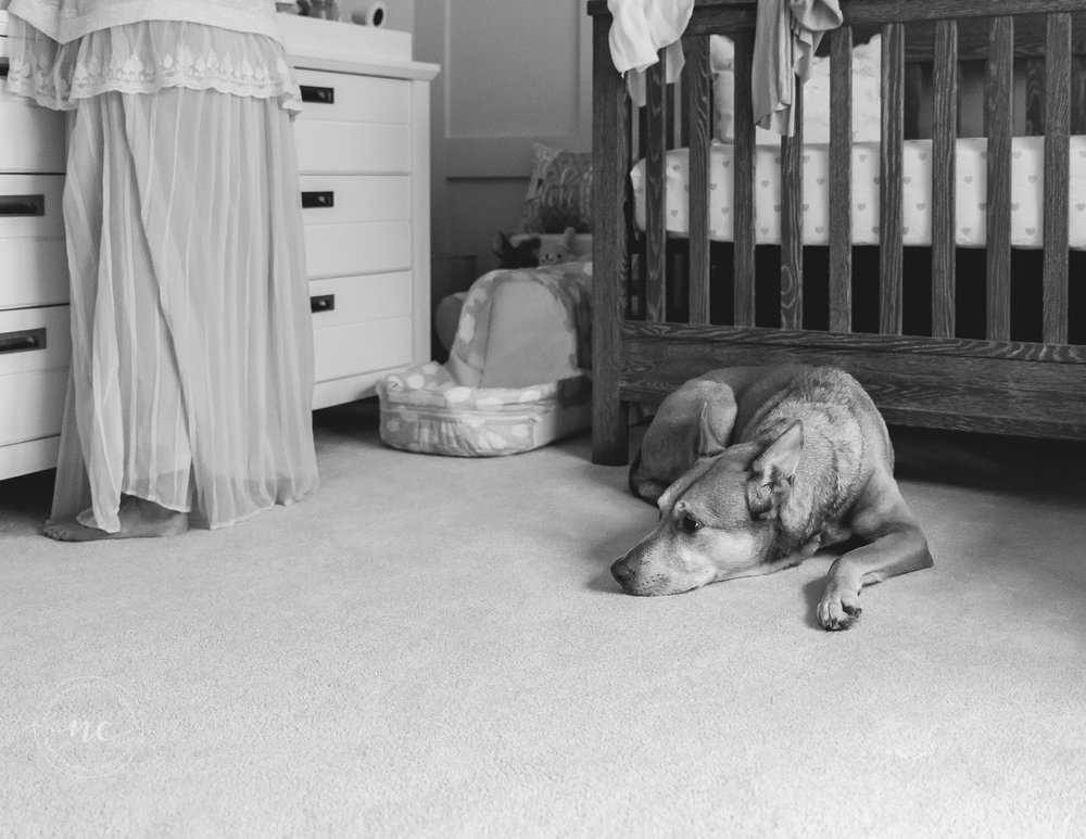dog in baby's nursery