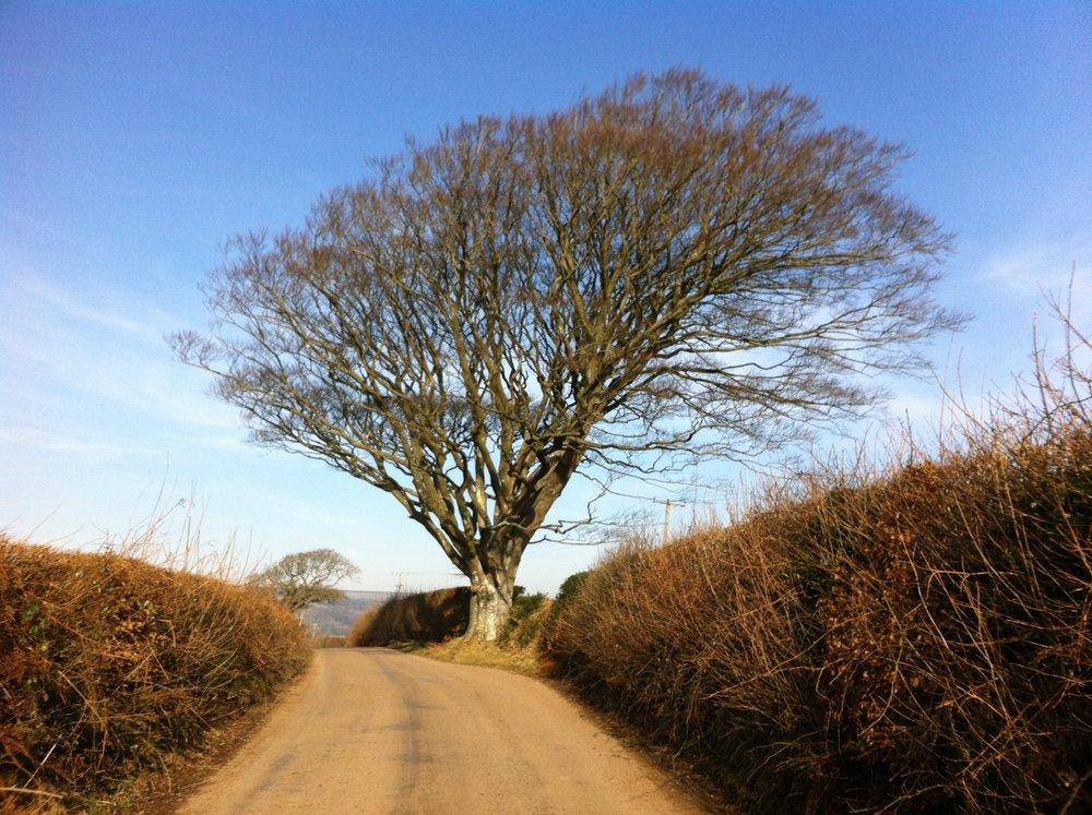 winter_tree.jpg