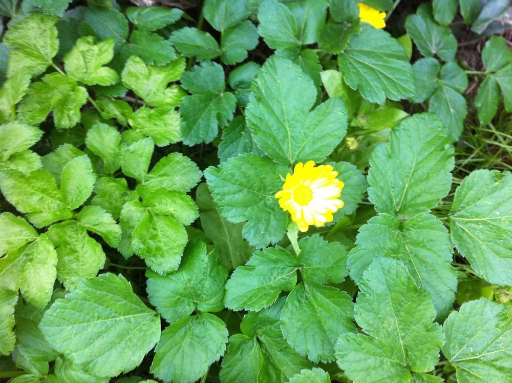 summer_yellow_flower.jpg