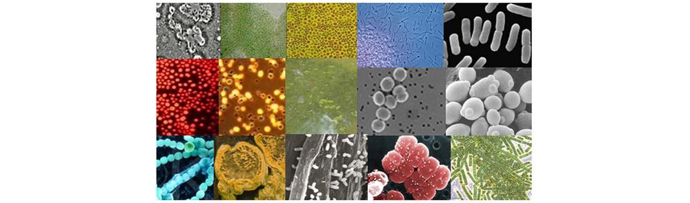 microbes.jpg