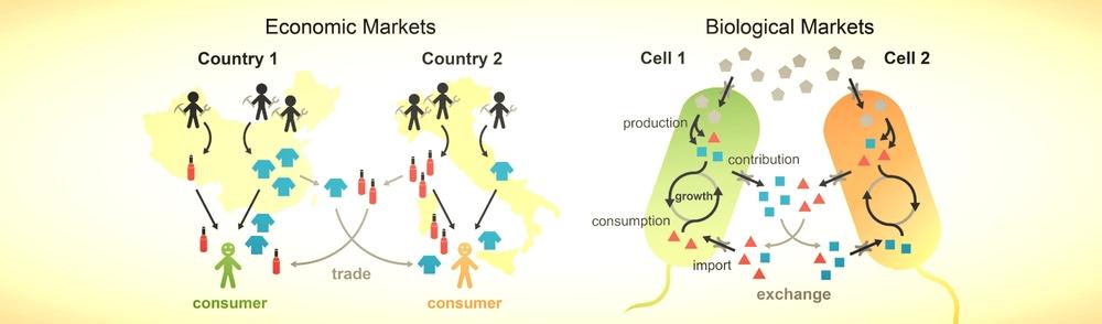 biomarket.jpg