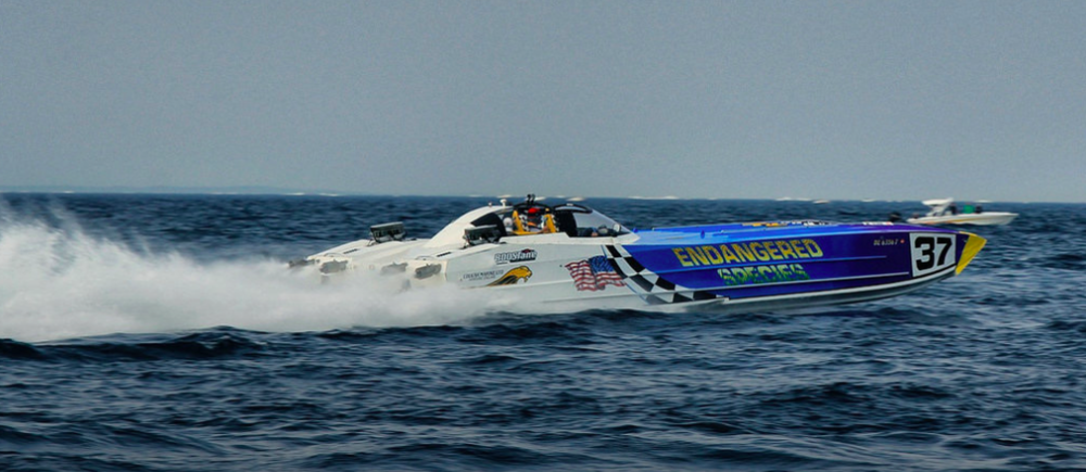 WMO sponsor (  Boostane ,  Wesco Racing Engines   )  Dave Wesseldyke's 'Endangered Species' was one of the most attention-getting boats of the run.