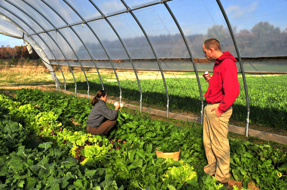 "Emily Oakley and Mike Appel harvest vegetables in the hoop house on Three Springs Farm in Oaks Oklahoma. The couple owns and are the only workers on the small five acre farm. ""This is definitely a profession that chooses you"" said Appel. Nick Oxford for The New York Times"