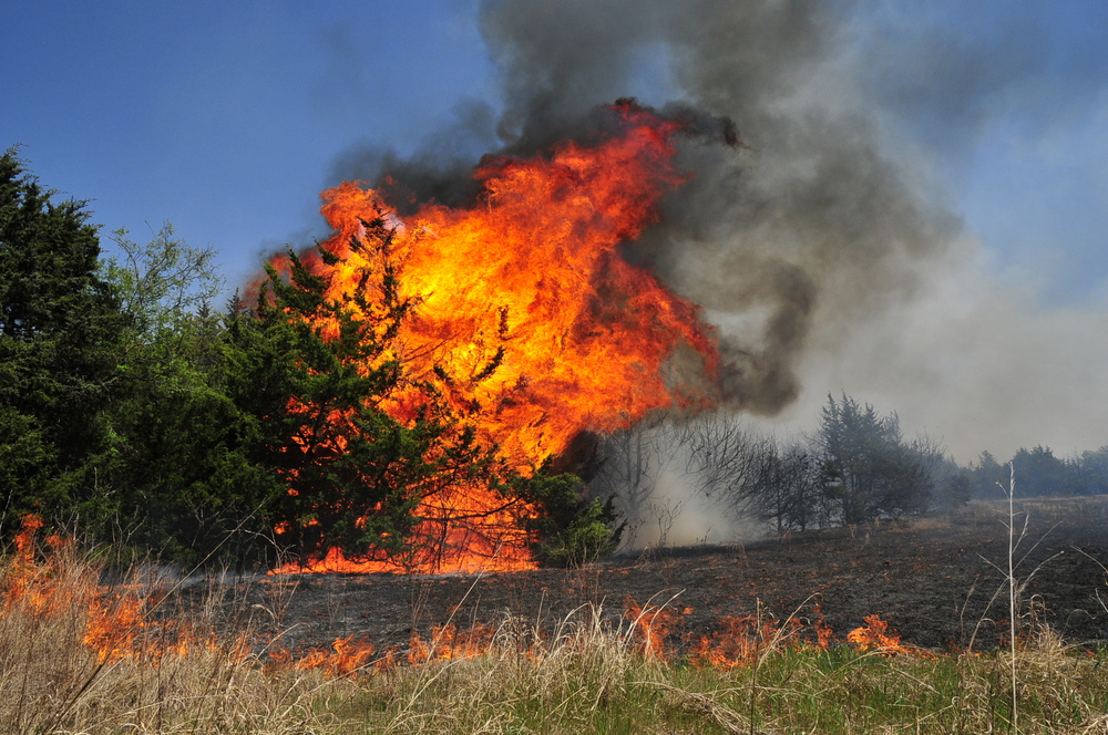 A wildfire burns through a grove of Red Cedar trees as firefighters continued to work on containing the blaze on Monday, May 5, 2014, in Guthrie, Okla. (AP Photo/Nick Oxford)