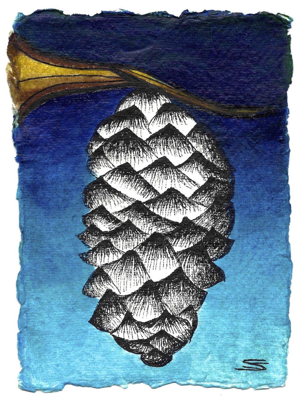 Pine cone.jpg