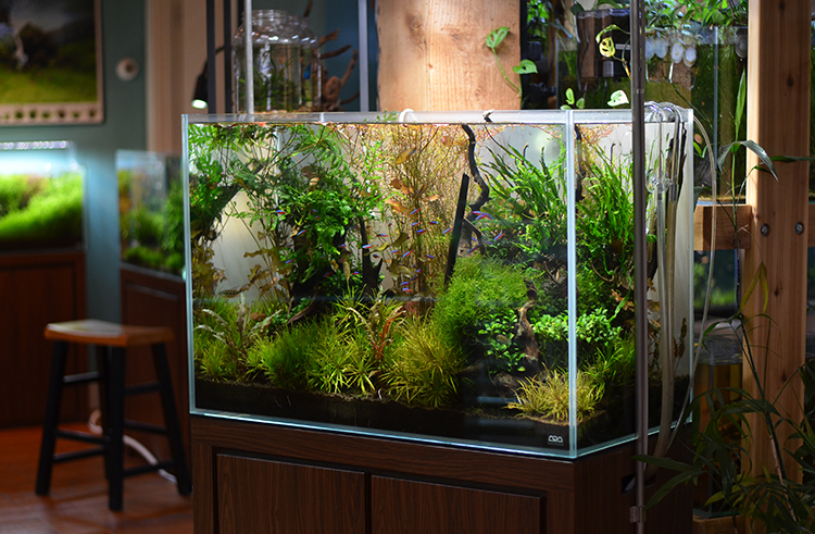Aquarium-Zen-Seattle-Fish-Store-Nature-Aquarium-Display