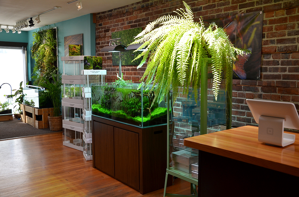 The shop showroom aquarium zen for Tropical fish shop