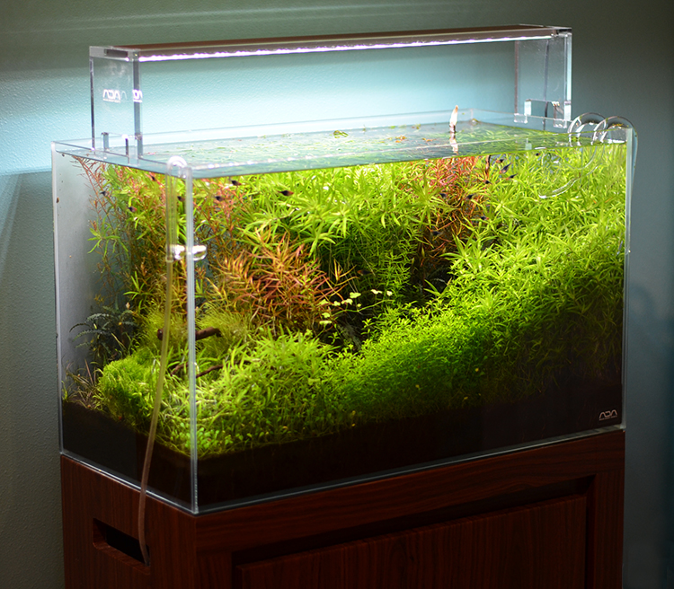Decoration Zen Aquarium : Aquarium zen