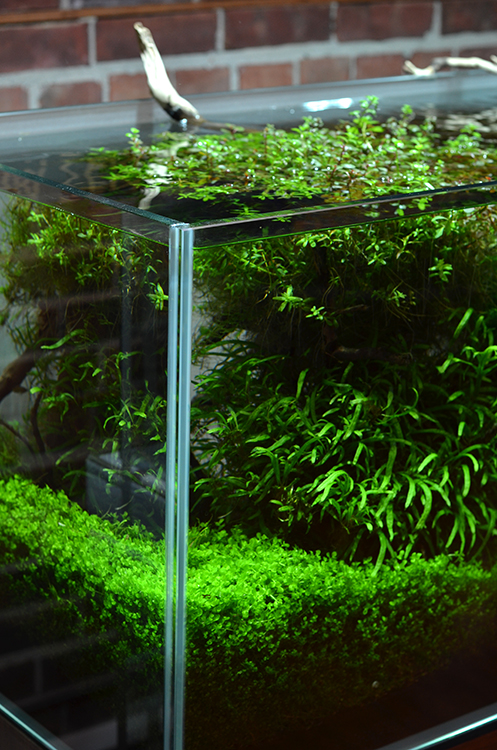 Aquarium zen for Decoration zen aquarium