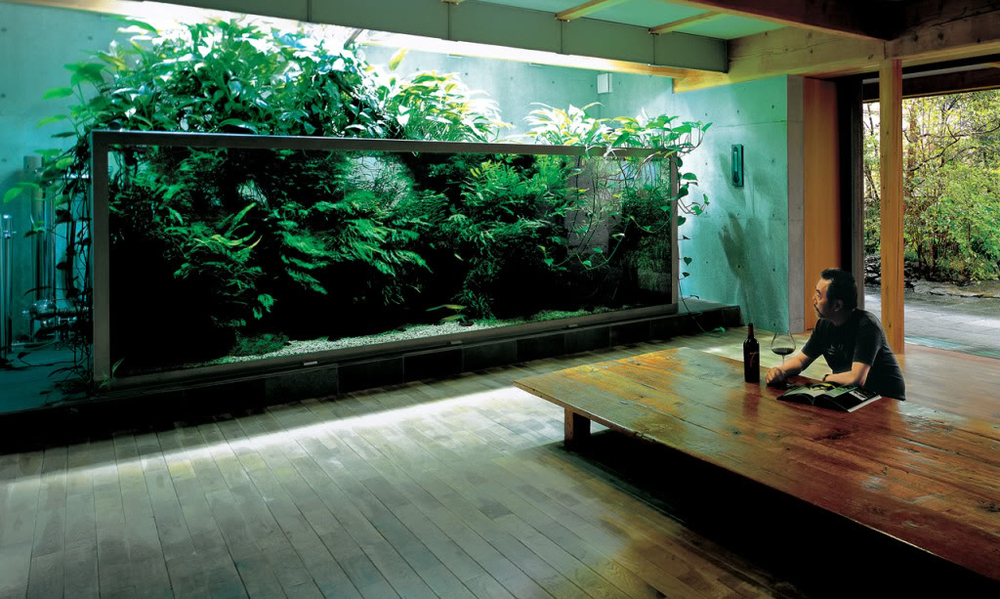 The Nature Aquarium style was created and developed by Japanese master aquarist, Takashi Amano.