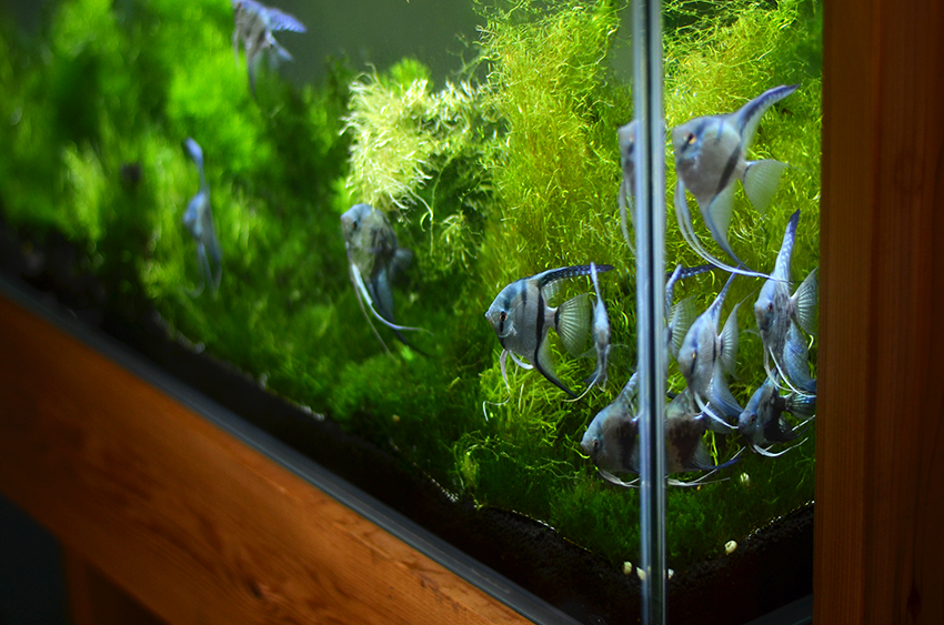 Products aquarium zen for Decoration zen aquarium