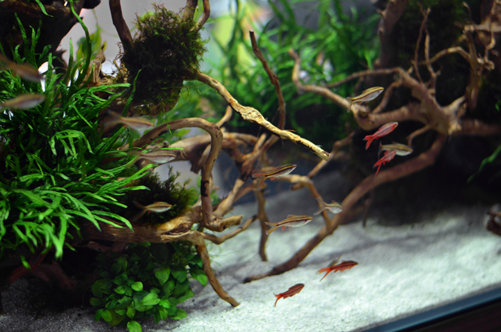 Aquarium-Zen-Seattle-Fish-Store-Aquarium-Maintenance