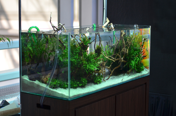 Services aquarium zen for Design aquarium