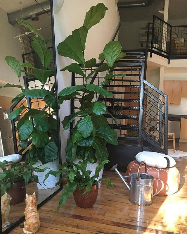 Up the studio steps for yoga practice, Zafu cushion ready for afternoon meditation and happy plants watered.  Especially love my new crocodile fern! @jacobmichael and @meghnacdave ❤️ #morningmotivation #yogaandmeditation  #dailyroutine