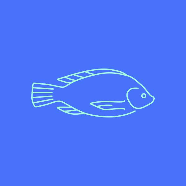 Fish_DesignAhoy.jpg