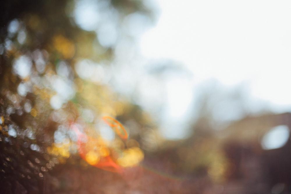 free lens- juliette fradin.jpg
