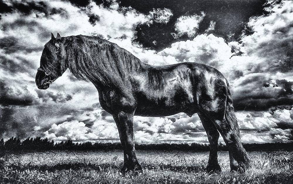 Equus Lucis Jodukus Fresian photo by Kent Miklenda 800pxh.jpg