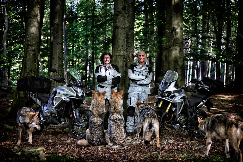 With the wolves at Wildenburg