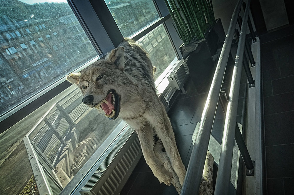 Narvik hotel - wolf it is dead