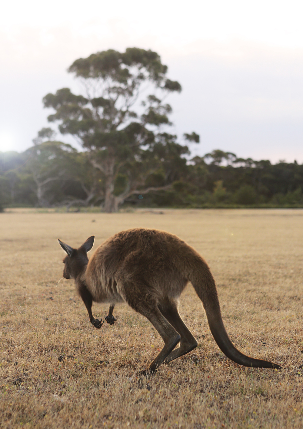 southern ocean lodge kangaroo island u2014 in bed with