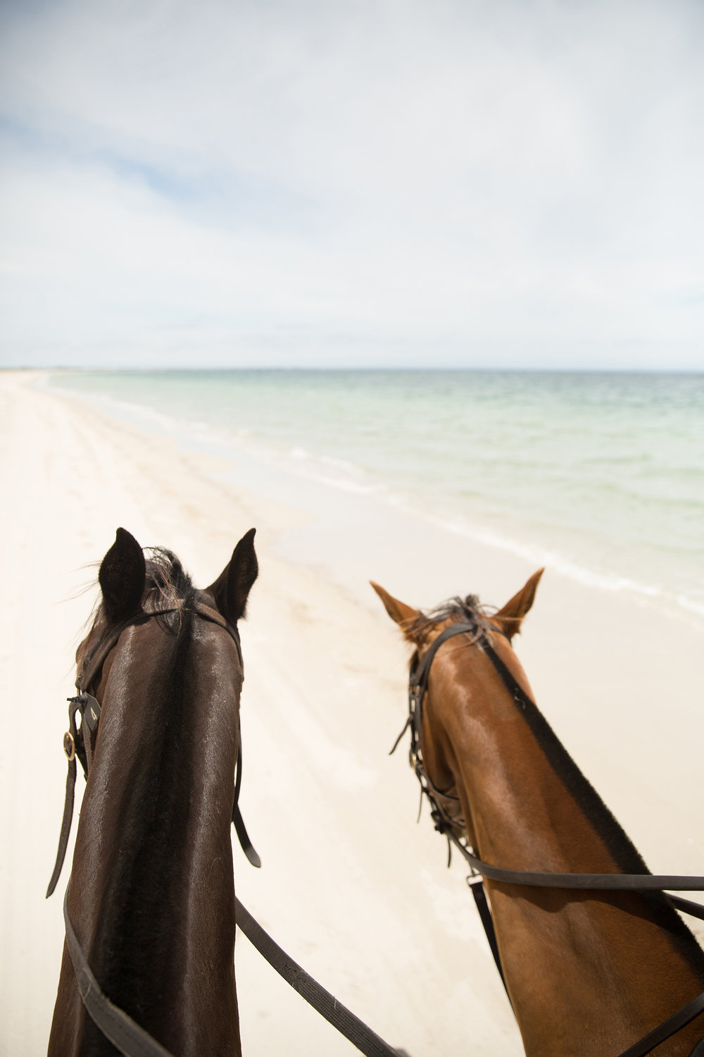 Horse riding along Forrest Beach with Jesters Flat Equestrian Farm.