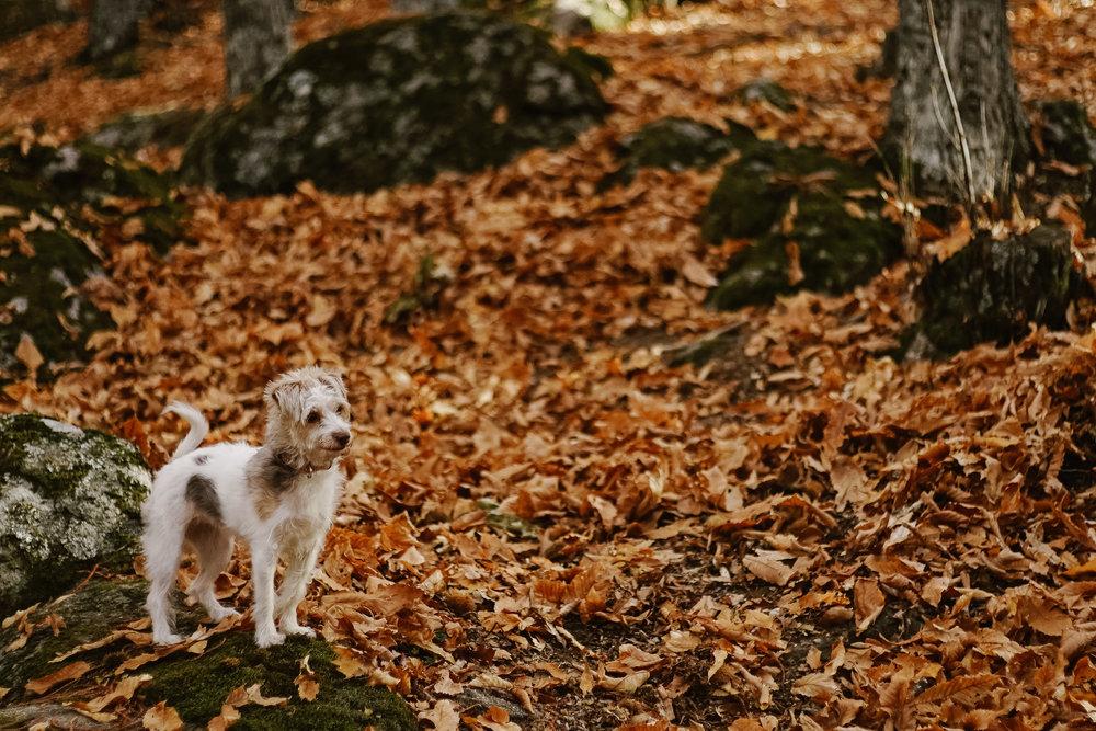 preboda-en-otoño-11.jpg