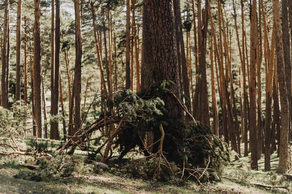 preboda-en- bosque-87.jpg
