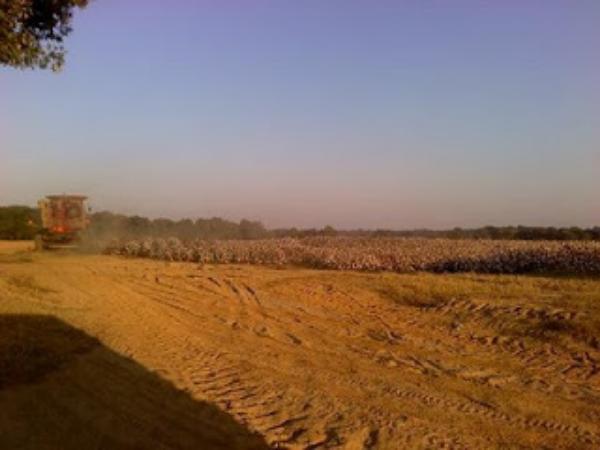 The fields are white unto harvest