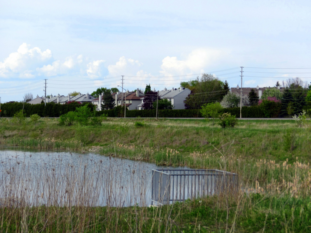 Environmental Impact Statement and Fish & Wildlife Salvage for the Barrhaven West Subdivision (19 single homes) for DCR Phoenix Group of Companies - Barrhaven (Ottawa), Ontario