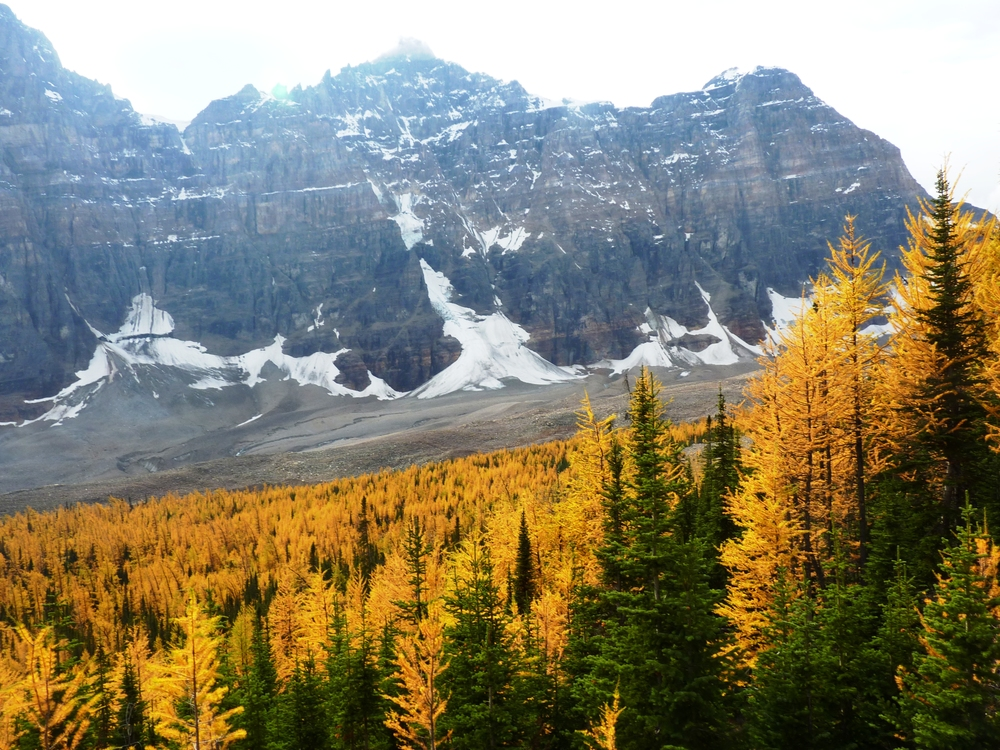 Fall Larches, Wenchenka Trail