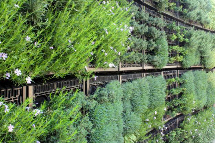 vertical garden perfect for Hopewell Junction, NY homeowners