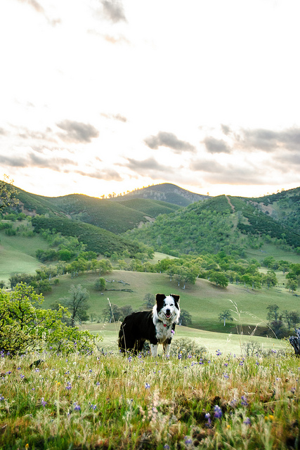 Dog friendly landscapes in the Hudson Valley