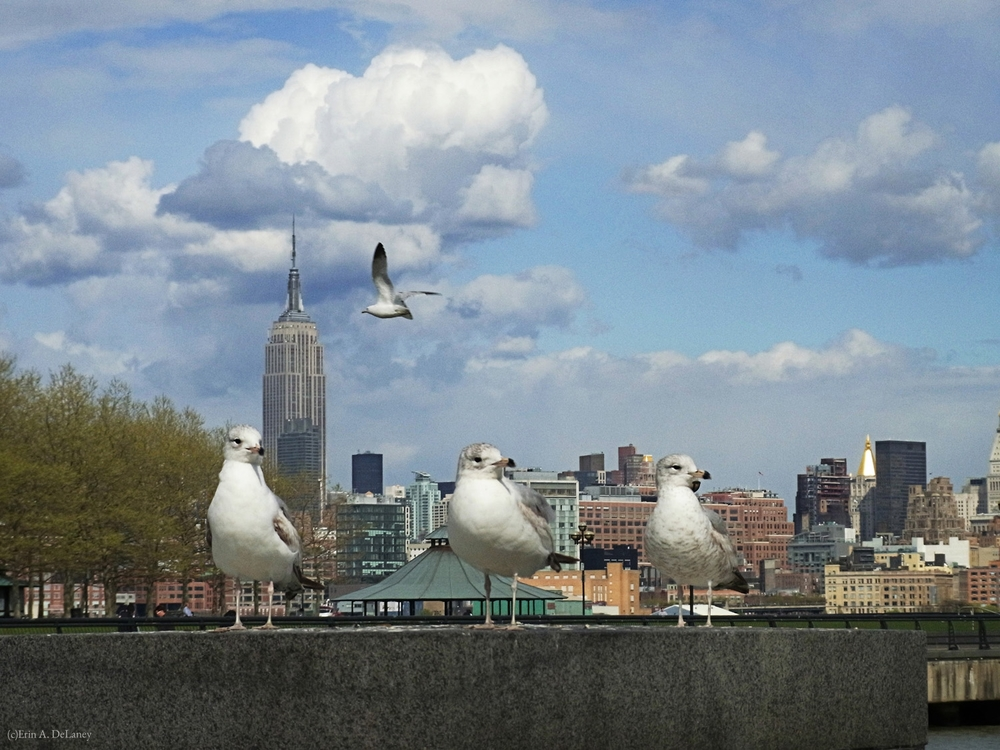 New York Skyline with Seagulls, 2012