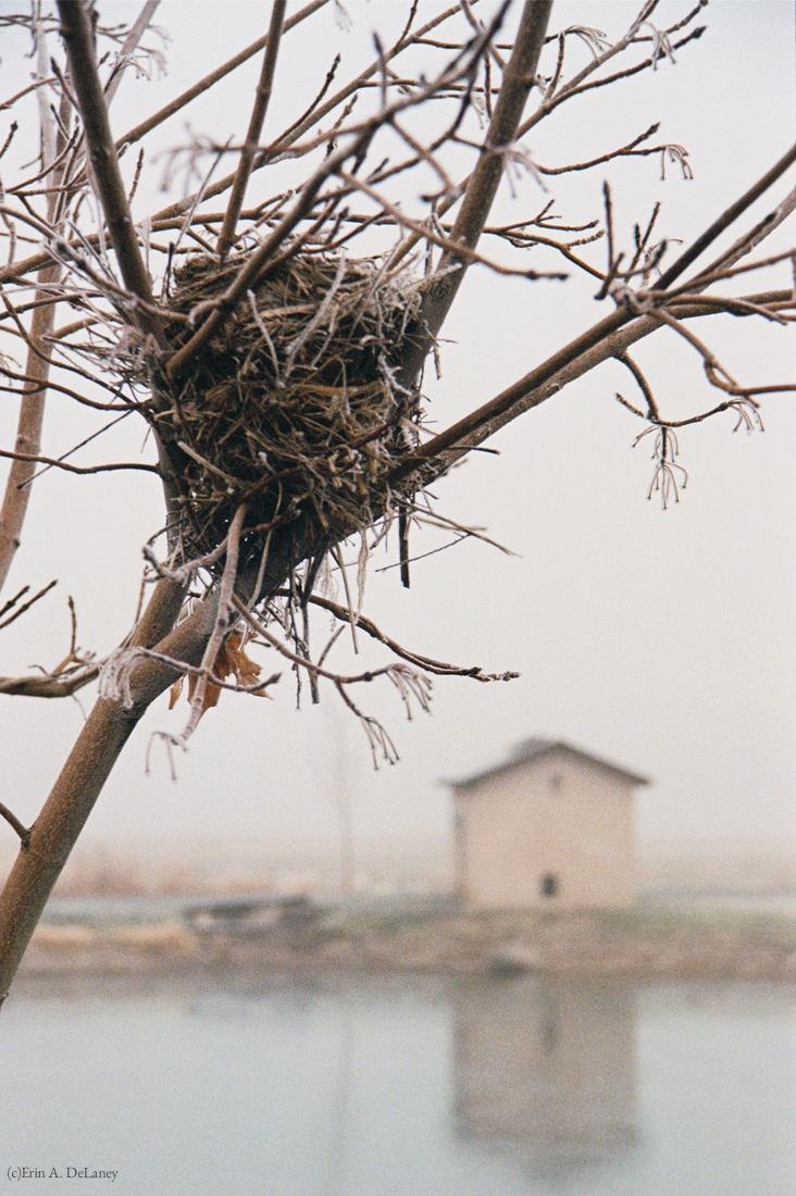 Bird's Nest Home, 2001
