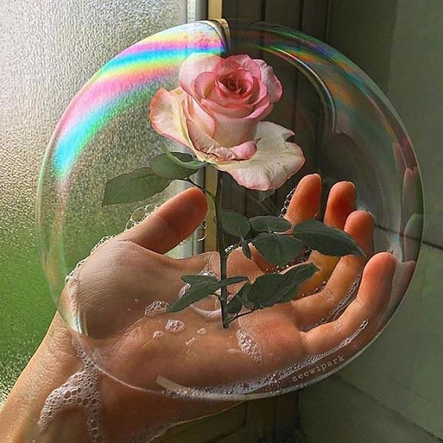 🌹 by @zeewipark via @popmyeyes #rose #bubble #hand #neverleather #neverfur @fruitenveg