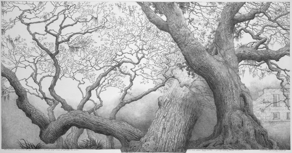 Charles Brindley, Study of Various Live Oaks and Architectural Ruins / Graphite on paper / 26×16 inches / 2009