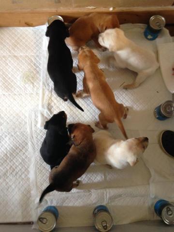 Sadie's pups.jpg