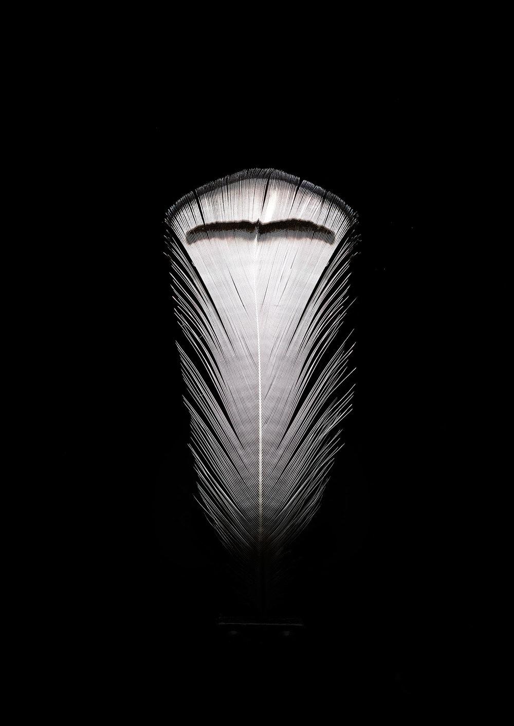2. white feather.jpg