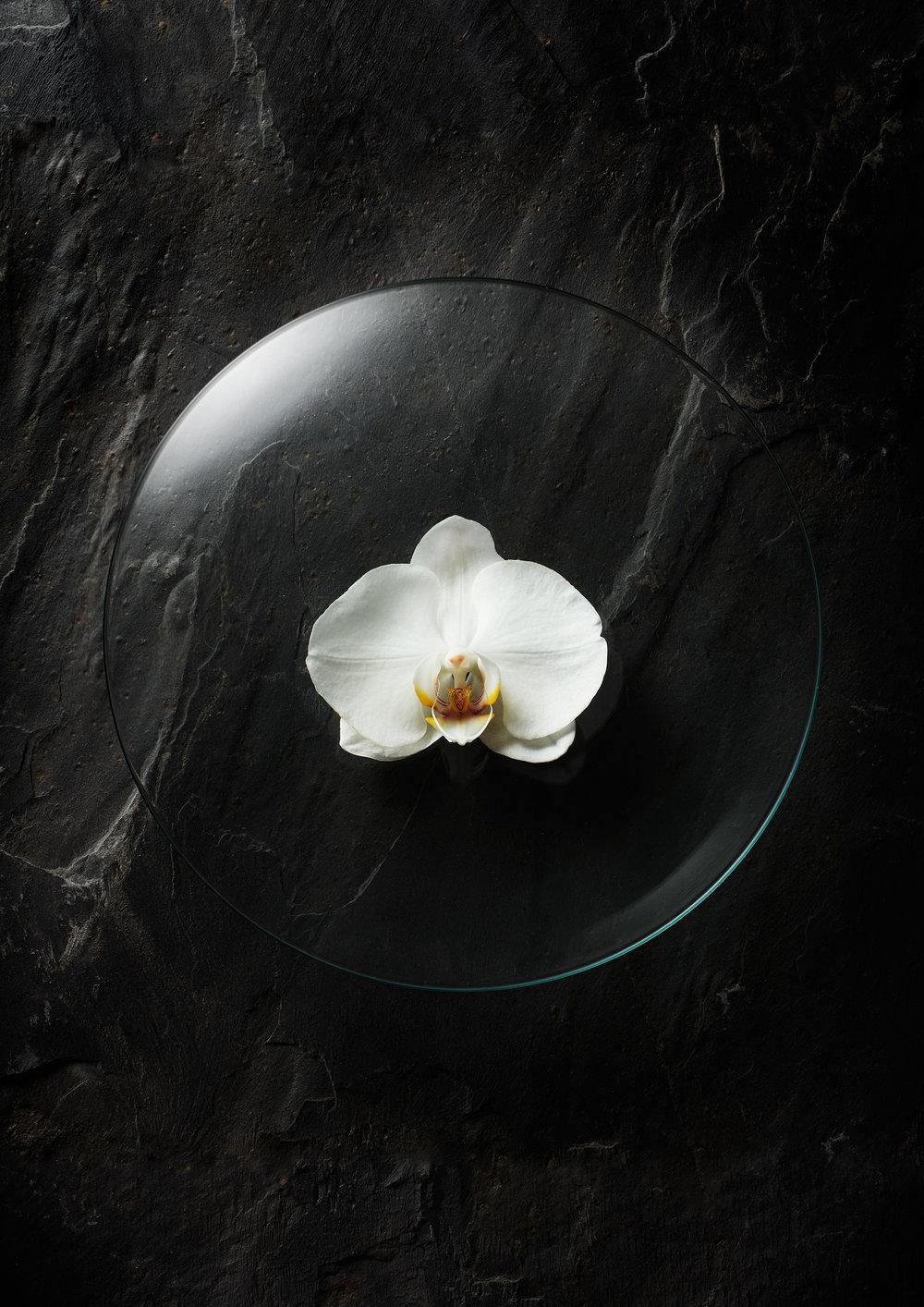 WatchGlassFlowers-Orchid.jpg