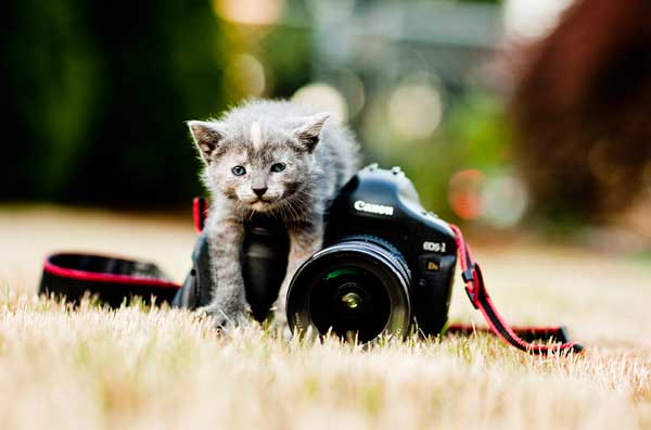 cat-taking-photo.jpg
