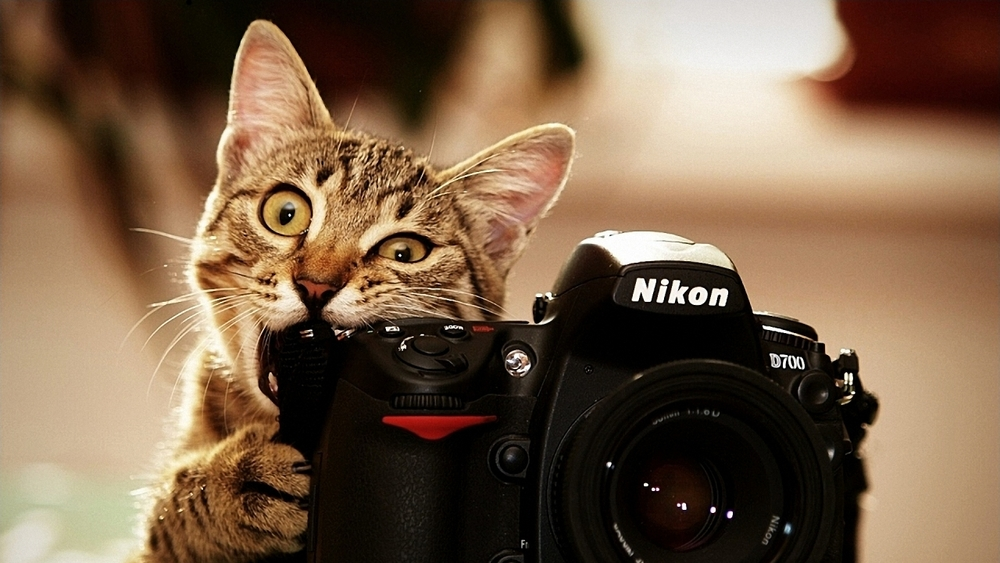 cats-bite-funny-cameras-nikon-kittens-photo-camera-biting-1280x720.jpg