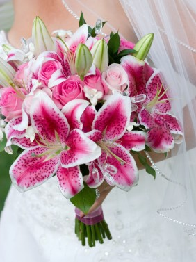 RNW- Stargazer lily.jpg